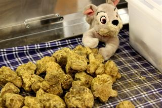 Truffle - CU white truffles at 350 dpi