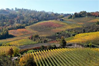 Prima - Barolo countryside - so beautiful