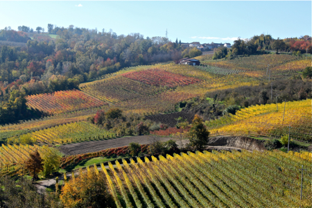 Prima - Barolo countryside - so beautiful