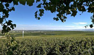 A - Seven Hills Vineyard #2