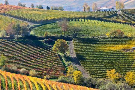 Prima - Barolo countryside - so beautiful 2