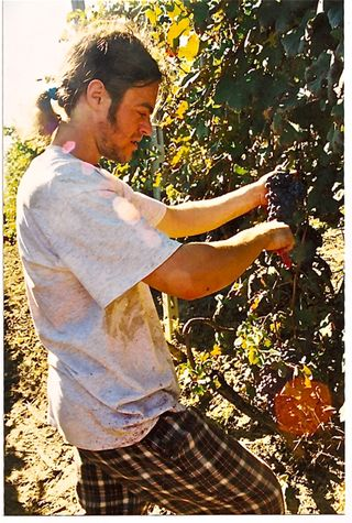 Barolo -- Matthew in vines