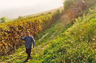 Barolo - Matthew walks among the Nebbiolo vines in the Langhe