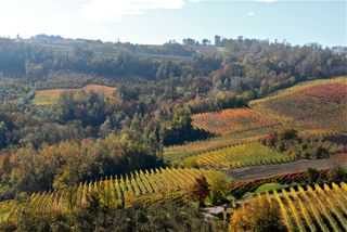 Barolo - Jim's shot 2