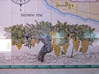 A - Jerez, Palomino grapes on tile