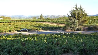 A - Coppola - truck and vineyards