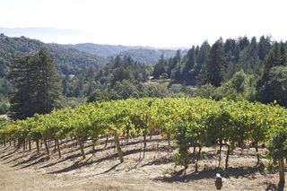 A - Mount Veeder vines