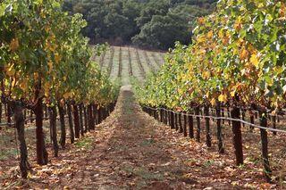 A - Chappelet - Cab vines