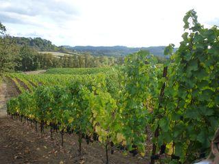 A - Tra Vigne- EIEIO vineyards