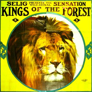 Kings of the forest poster