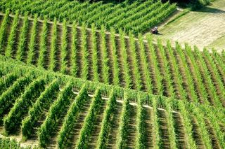 More Barolo Vineyards