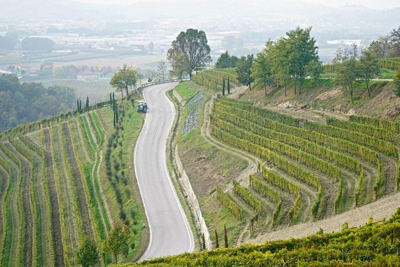 Wayne Thiebaud-like vineyard image