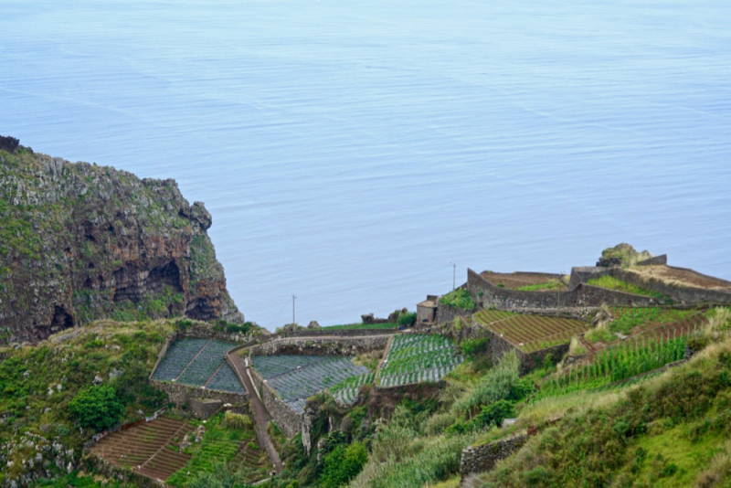 Terraced vineyards on the edge of the sea