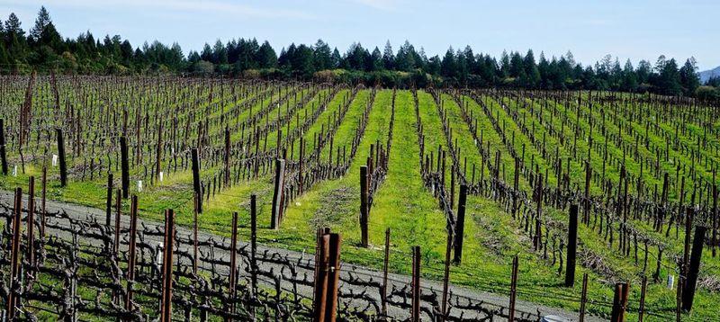 Sacrashe Vineyard