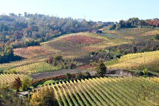 Opening shot, Piemonte vineyards