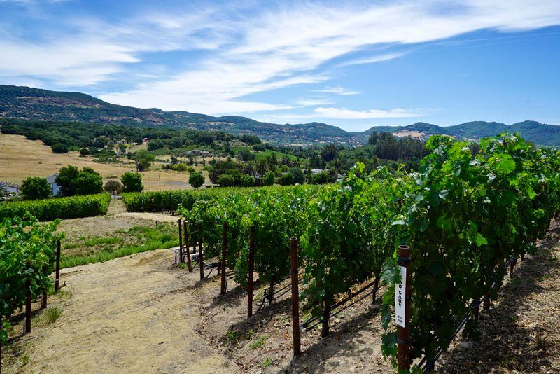 Covert Estate vineyards