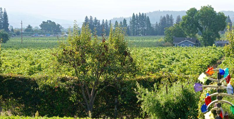 Bella Union Vines 2