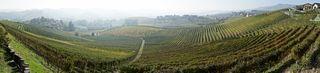 Panoramic view of vineyards