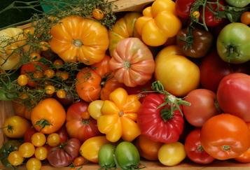 Tomato_horizontal