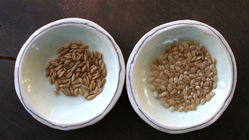 Oats_the_raw_ingredients